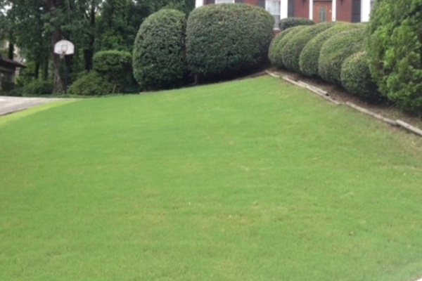 A freshly mowed front lawn
