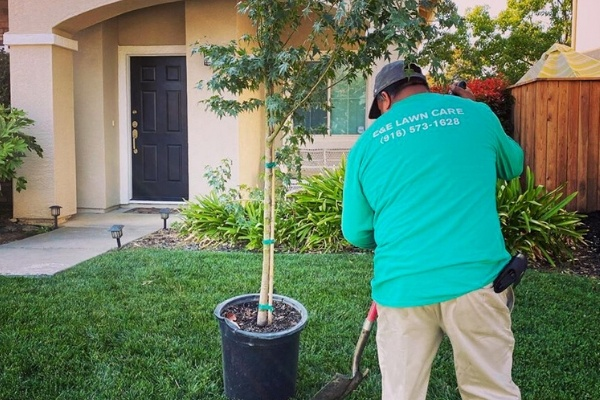 a E&E Lawn Care Employee trimming a potted tree.