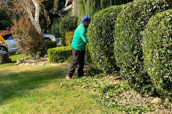 A E&E Lawn Care employee trimming shrubs