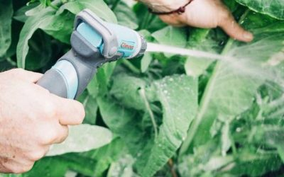 Save Your Garden: 5 Natural Remedies for Pest Management