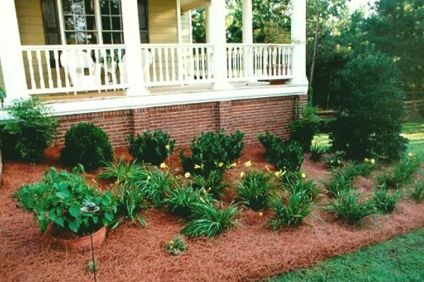 A landscape bed filled with fresh mulch and several plants.